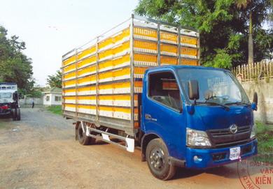 xe tải hino chở gia cầm