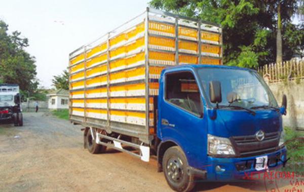 Xe tải Hino 5,2 tấn chở gia cầm